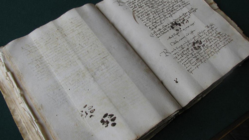 Cat paw prints on a 15th century manuscript