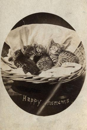 1870's picture of kittens in a basket