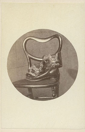 Cute cat pictures from the 1870's - kittens in a boot