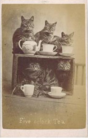 Cute cat picture from the 1870's of cats having tea