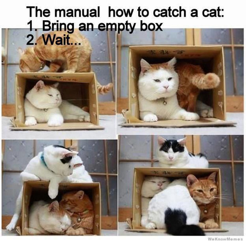 How To Catch a Cat in a Box