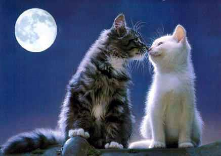 Kitties Feeling Lovey Dovey Under a Full Moon