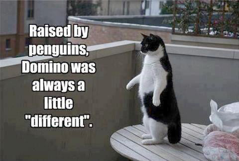 Image result for cat humor