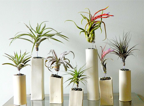 Which air cleaning houseplants are safe for cats?