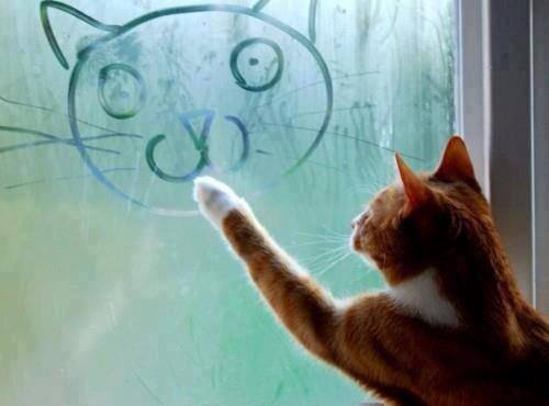 A cat and a cat face on a window