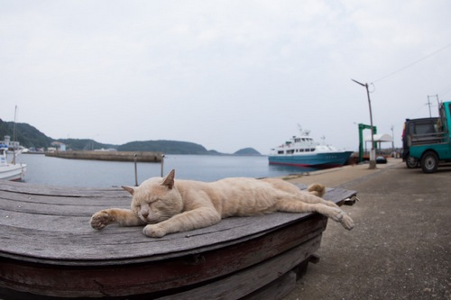 Cat Waiting for His Yacht on Cat Heaven Island