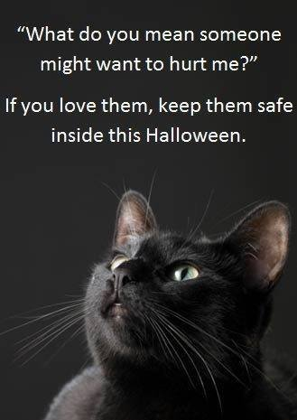 Why You Should Keep Your Black Cat Inside Around Halloween (it's good to keep all cats inside, all the time) at CatFaeries.com