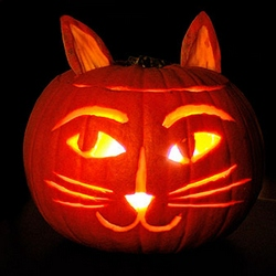 How pumpkin aids your cat's digestion at CatFaeries.com