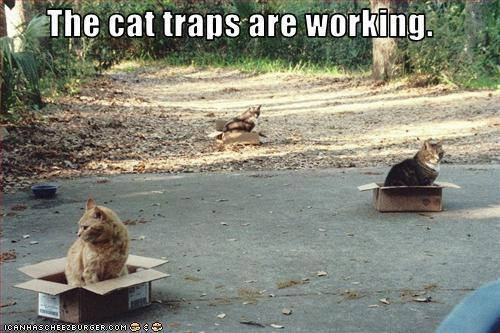 The cat traps are working at CatFaeries.com