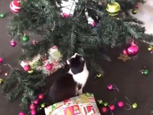 Cat Video: Cats Vs. Christmas Trees   Cute and Funny Cat Videos ...