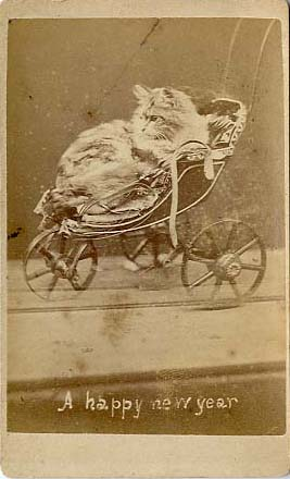 1870's picture of a cat in a baby carriage