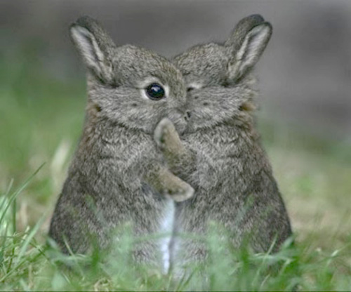 Hugging baby Easter Bunnies