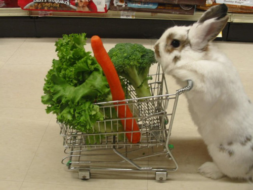 Easter Bunny With His Shopping Cart