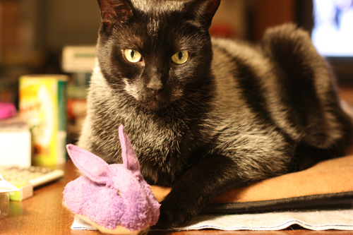 Kaboodle the cat with his Cat Faeries Catnip Bunny