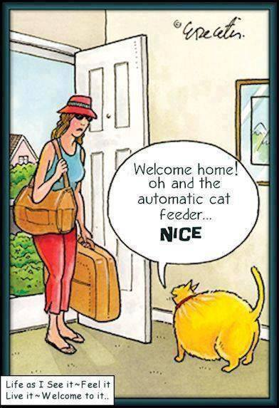 Cat Humor - A Kitty Likes the Automatic Cat Feeder