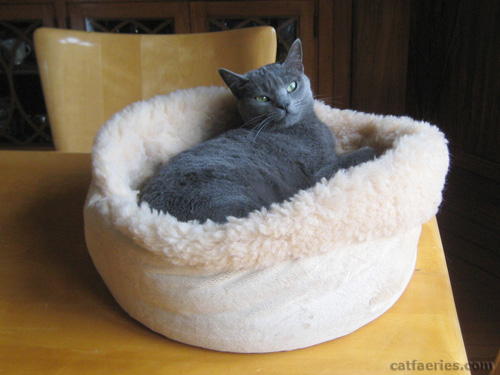 Why cat beds are important to a cat at CatFaeries.com
