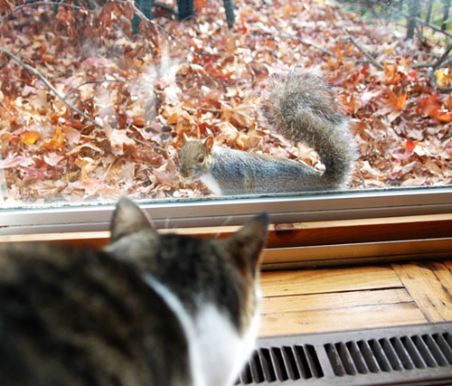 Are squirrels driving your cat crazy? at CatFaeries.com