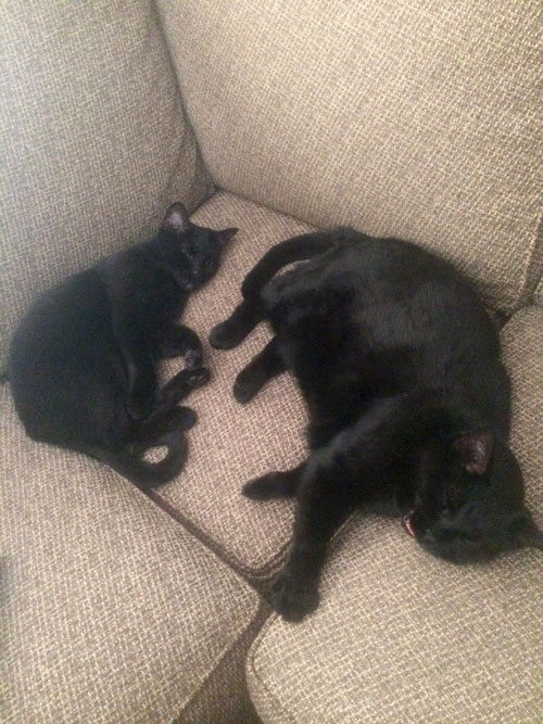Celebrating Black Cats in October - Chloe and Loki (from Roseann) at CatFaeries.com