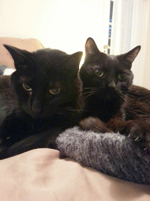 Celebrating Black Cats in October - two beauties from MT at CatFaeries.com