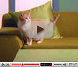 Comfort Zone with Feliway video preview