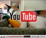 Juno loves her corncob video preview