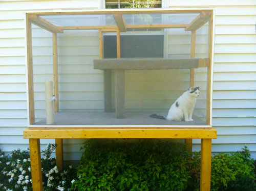 U201cWe Built This Catio For Professor McFlufferton At Our Previous Home And He  Loved It. He Could Watch Birds, Squirrels, Deer And All The Insects Without  The ...
