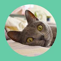 Cat Faeries Tm Online Catalog Featuring Convivial House