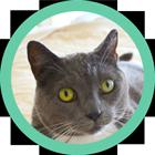 Convivial House Cat Spray