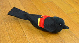 blackbird-270.jpg